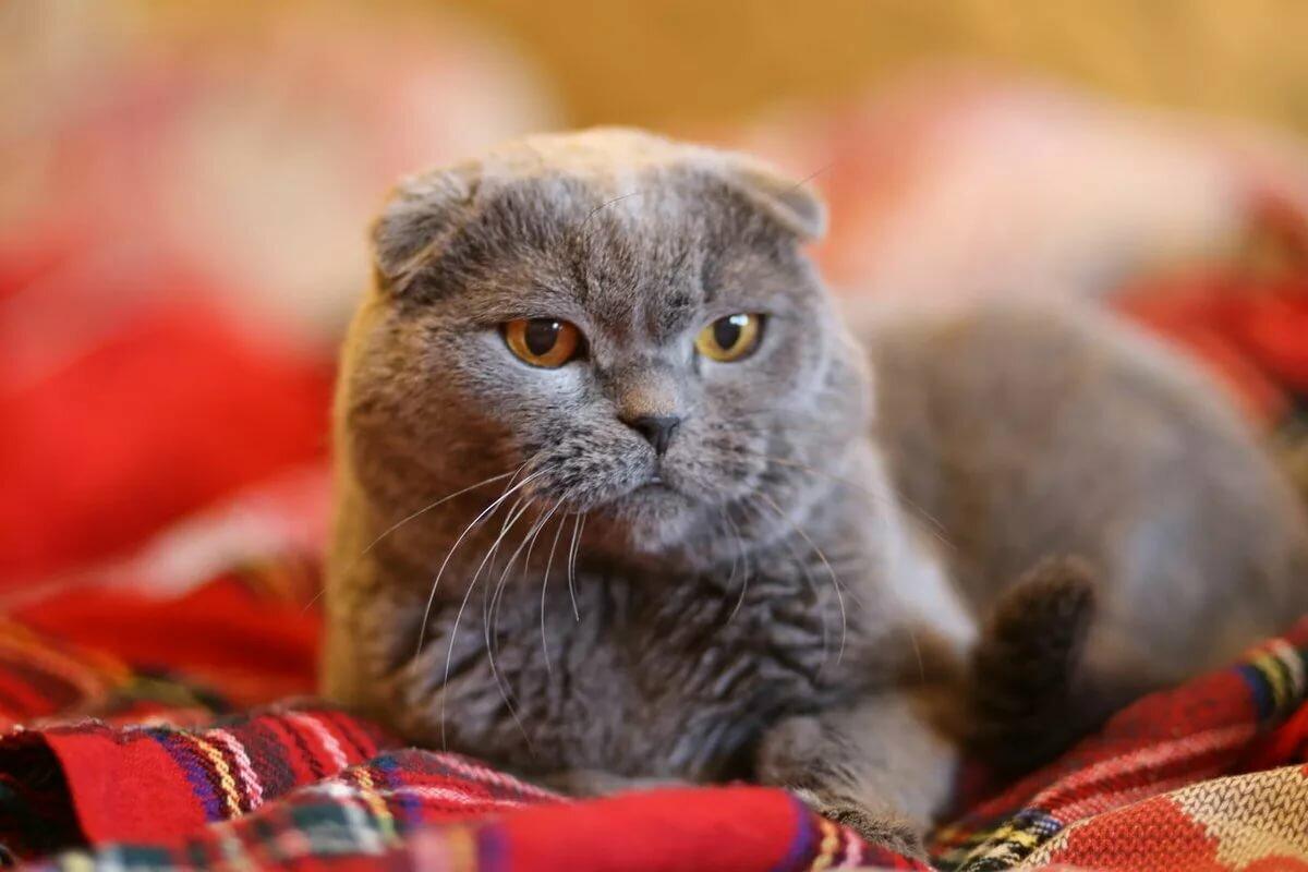 знаю что картинки на рабочий стол с вислоухими кошками просит удалить