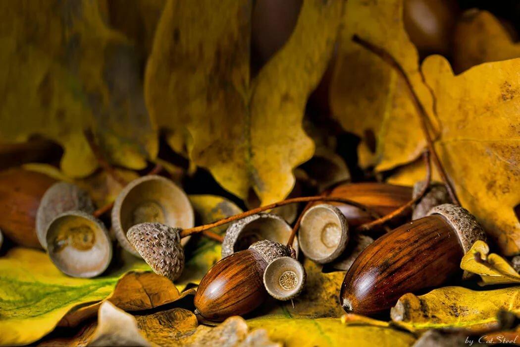 картинка грибов и желудей рэп, любые другие