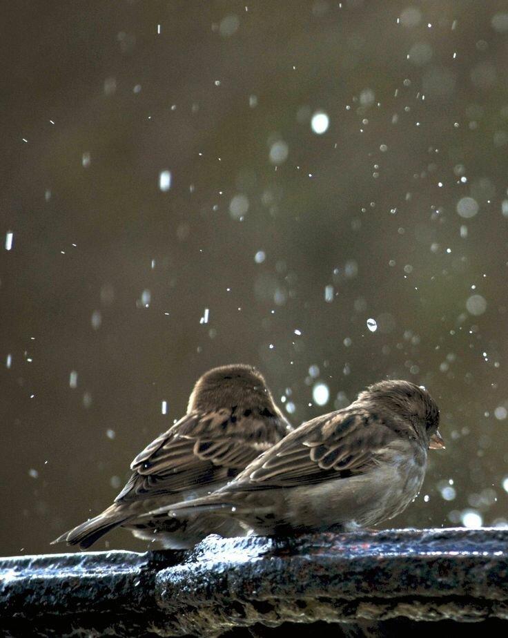 Картинки птица под дождем