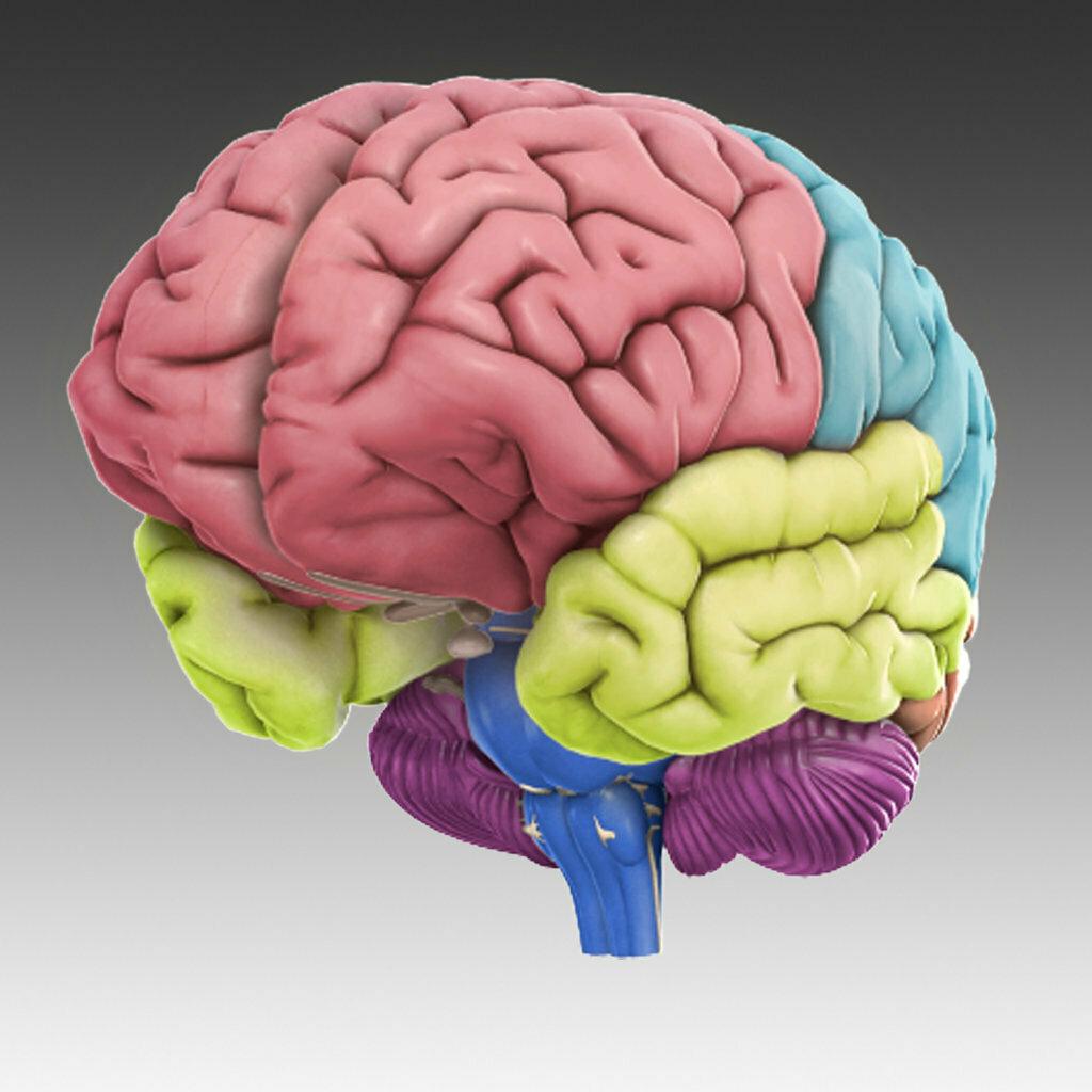 Пасху, картинки мозга для детей