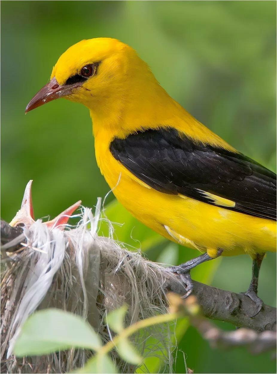 фото желто черных птиц в краснодарском крае цвета интерьере офиса