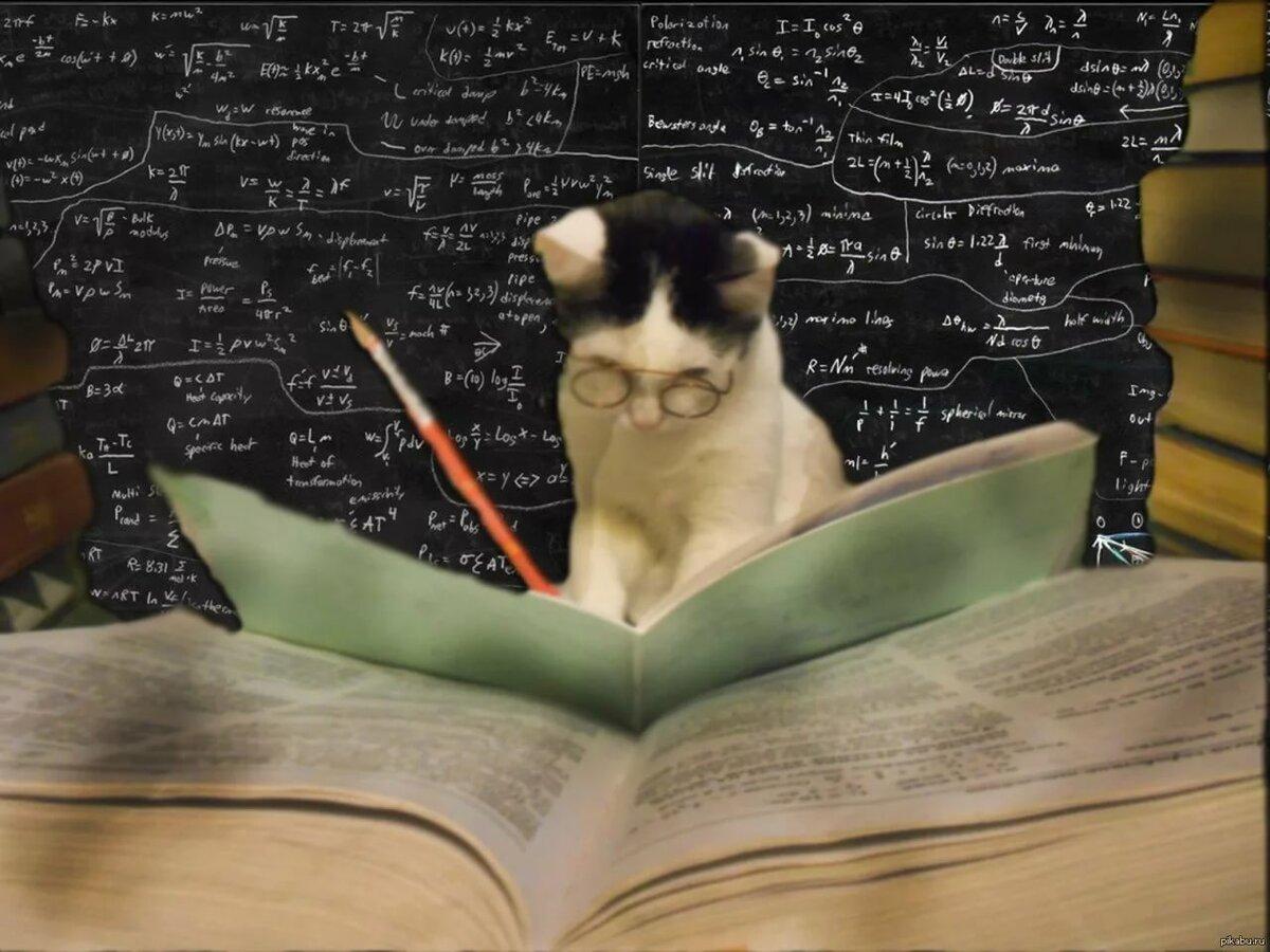 это, картинки кот ученый с книгой представлены самые простые
