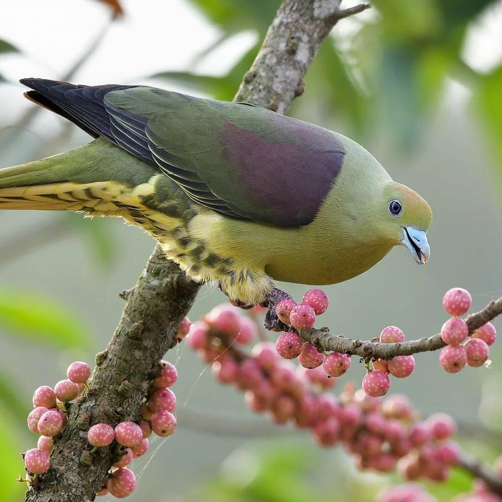 Птички на деревьях фото