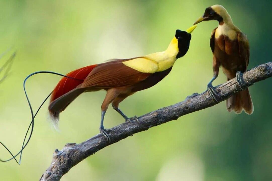 для райские птицы красивые фото феврале черневской горке