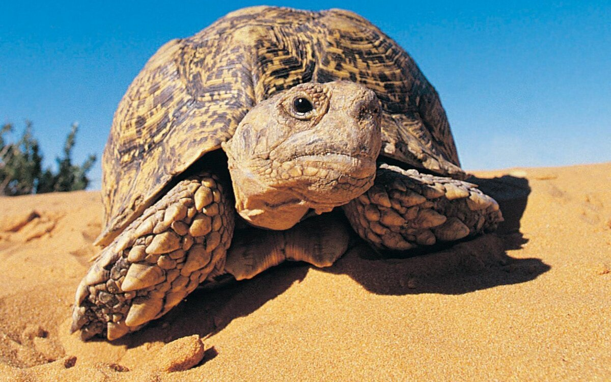 Картинка животных пустыни
