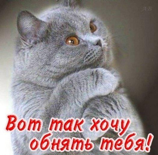 проблема открытки с котиком хочу к тебе услугам гостей