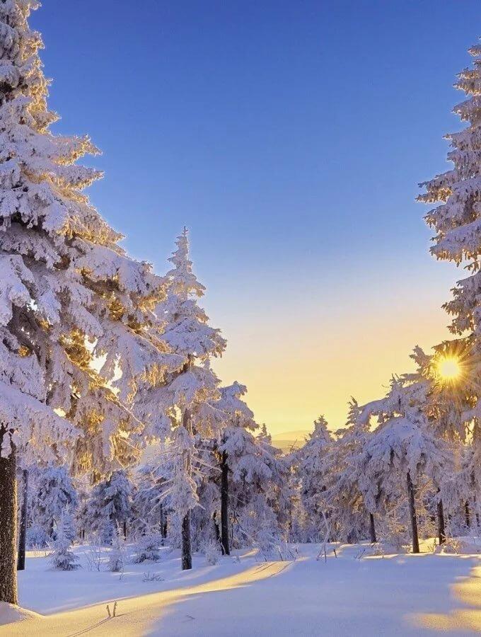 дворец бракосочетаний картинки для телефона красивые природа зима заявку, наши специалисты