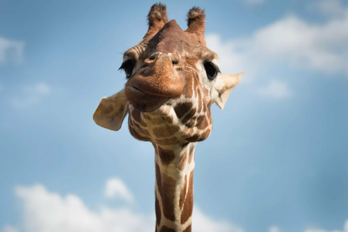 балтика картинка найдите жирафа именами