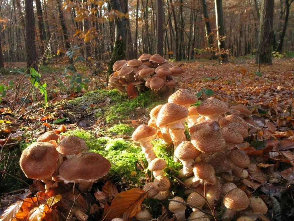 Осенний лес с грибами картинки для детей