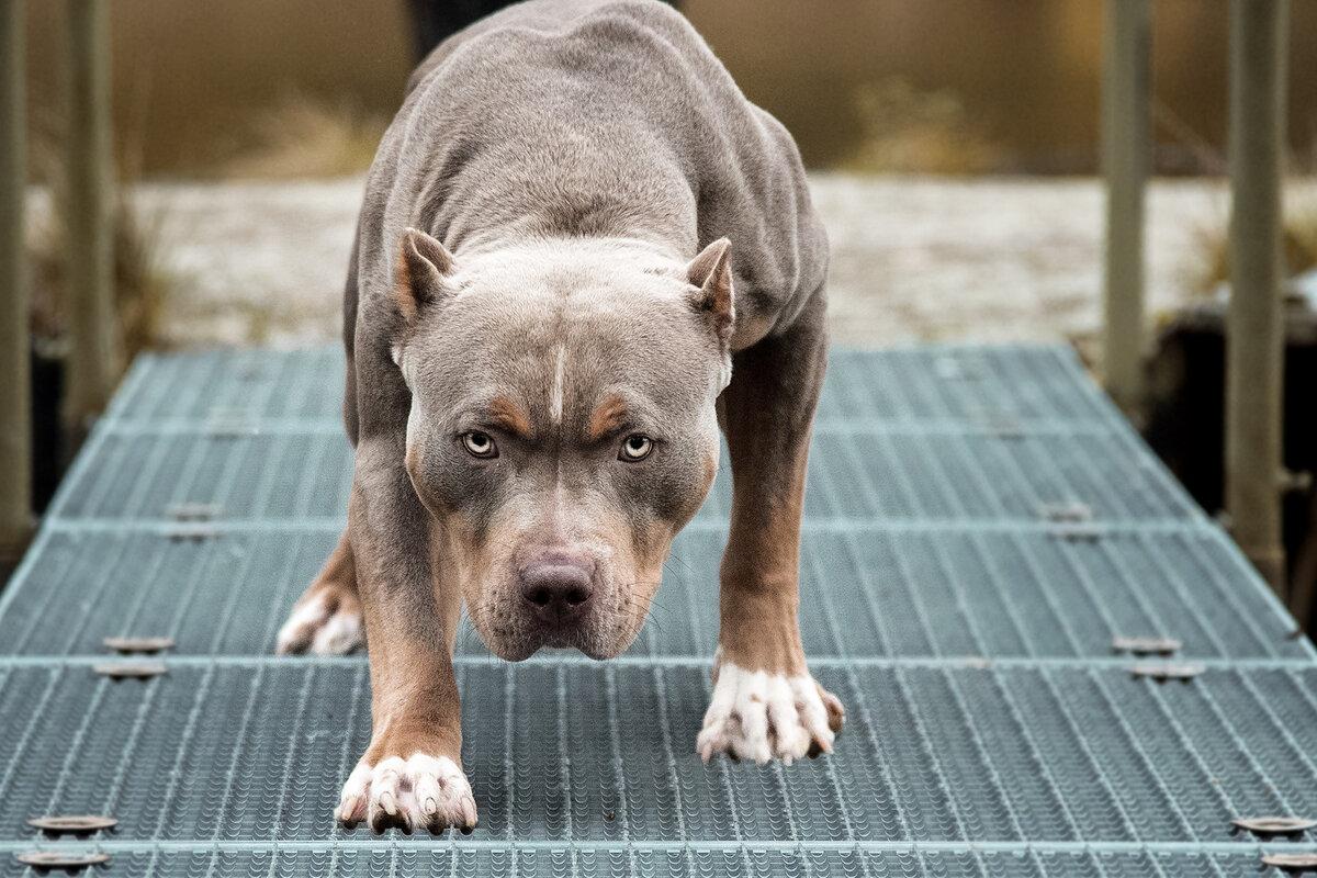 Грозные собаки картинки