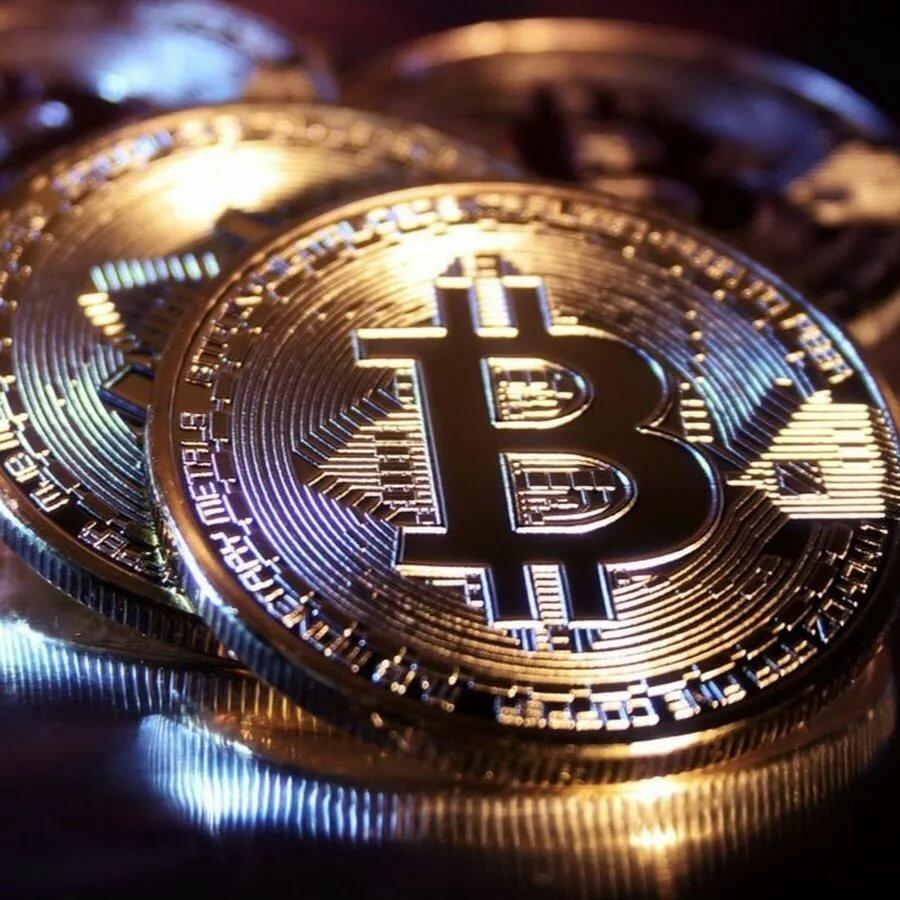 картинки валюты биткоин суккулентов, выращиваемых