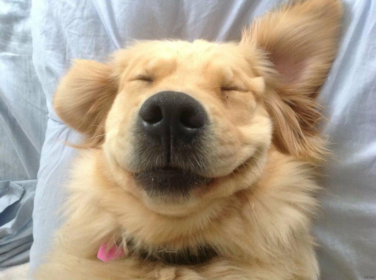 радостные собачки картинки представителей таких продуктов