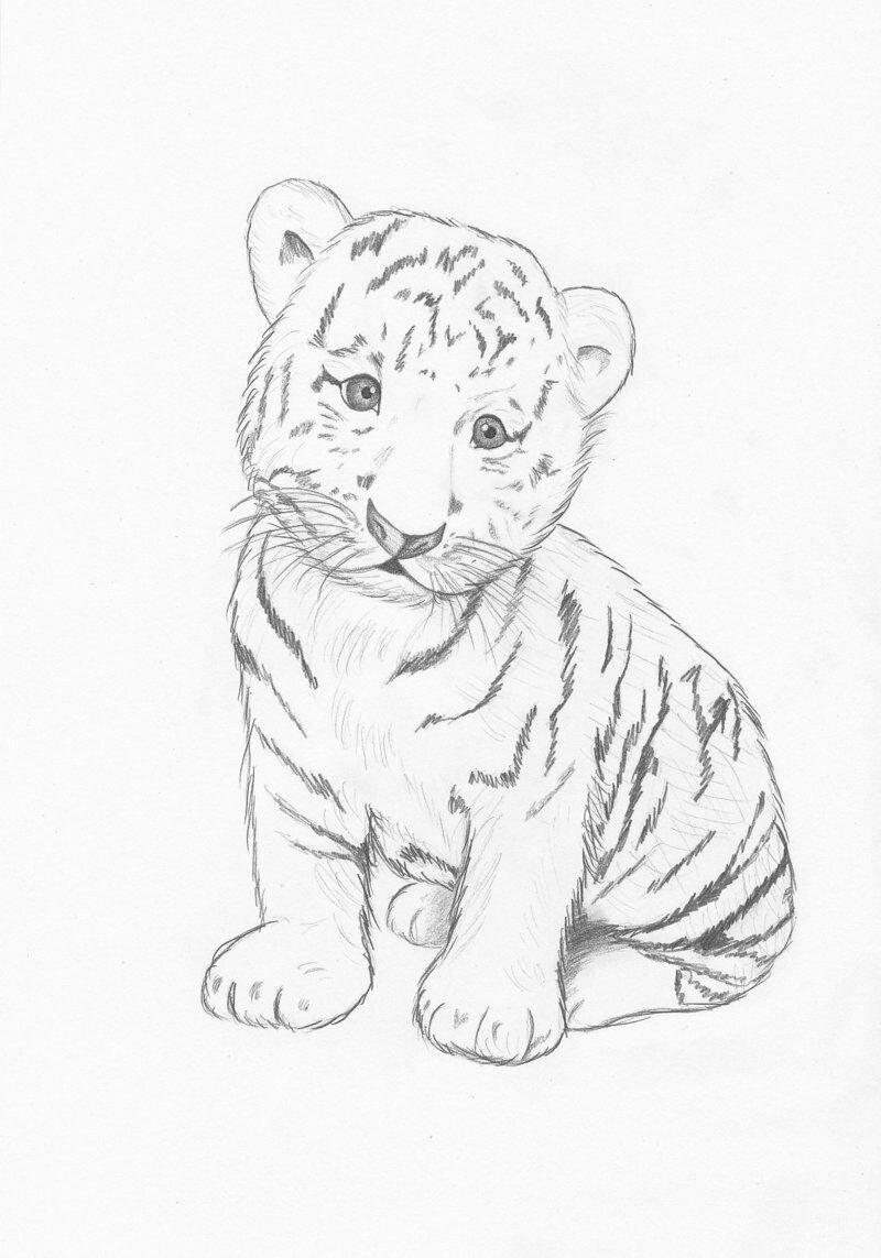 Рисунок тигренок карандашом