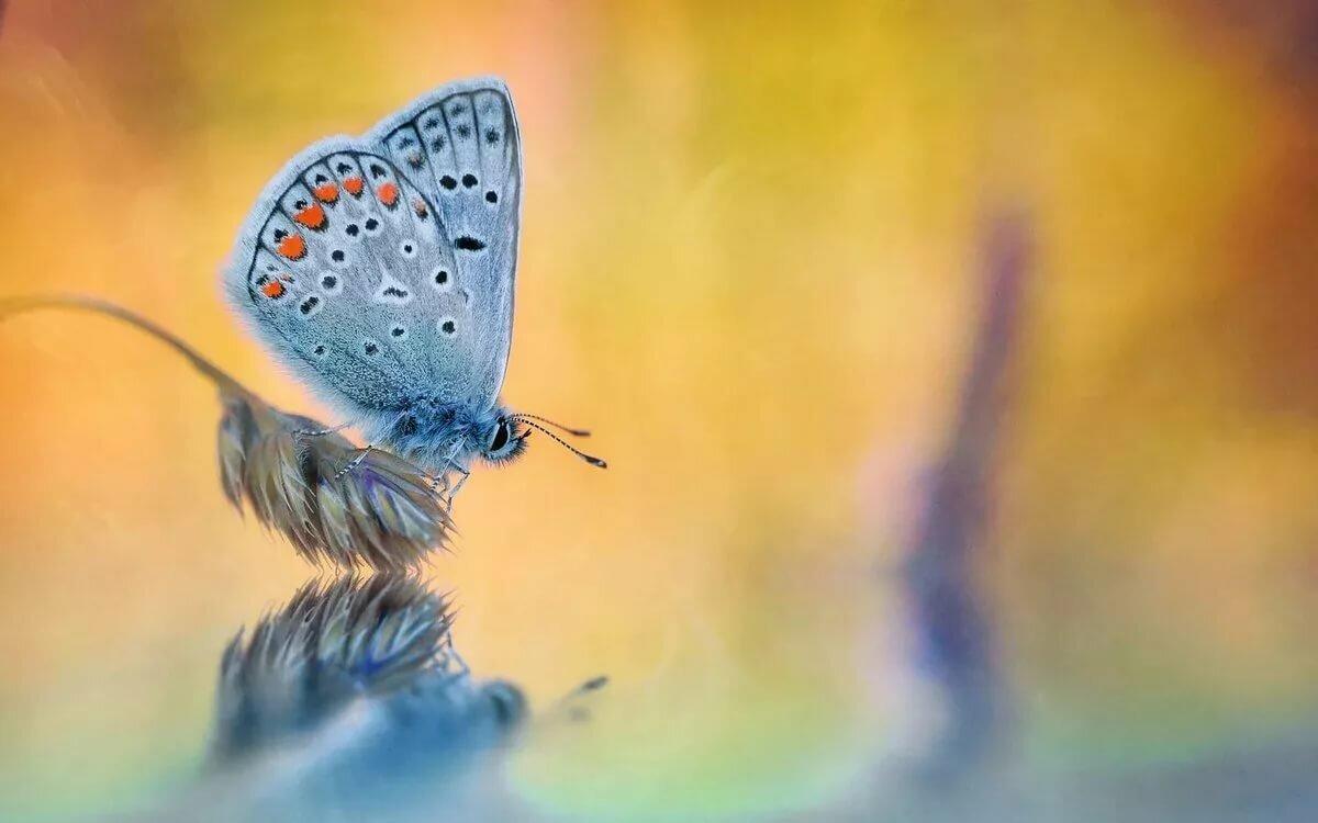 Картинки бабочки и вода
