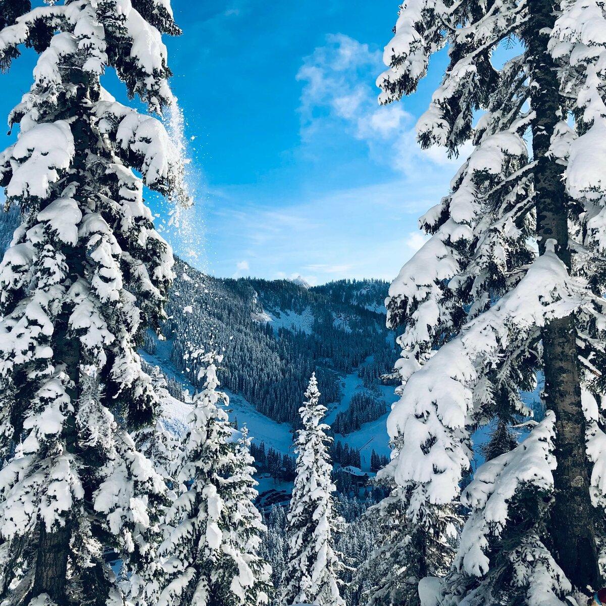 Зимний лес картинки для телефона