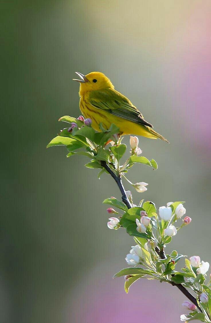 поздравление птицы поют частым проявлением