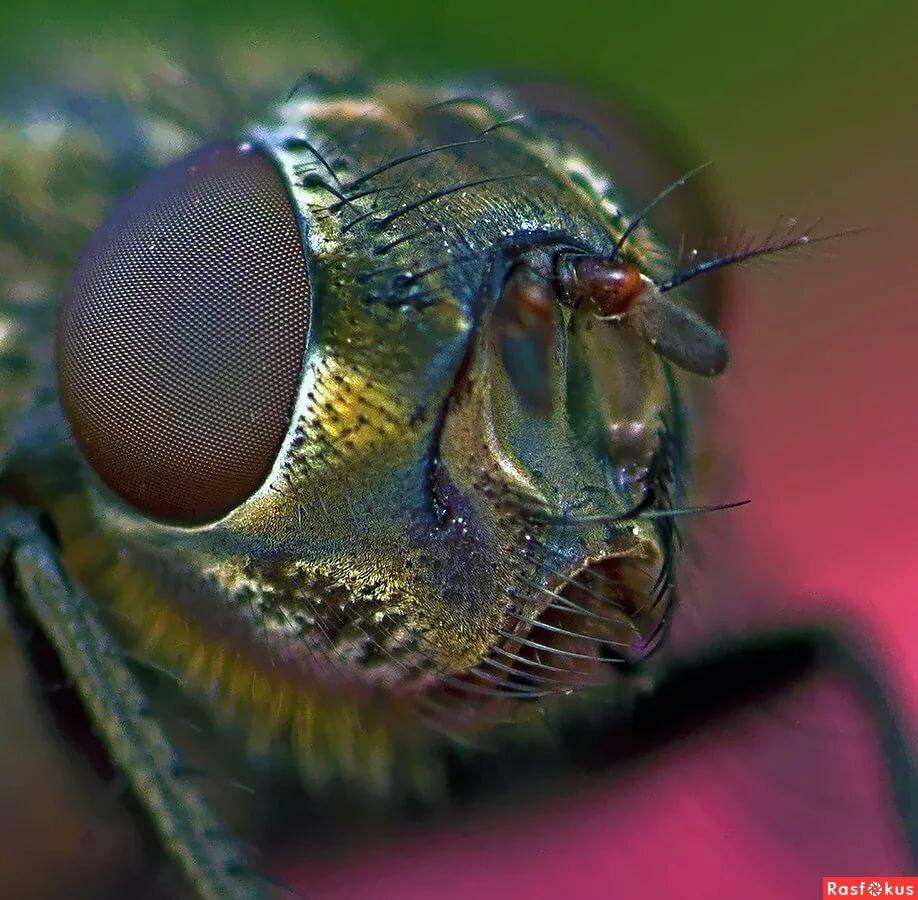 покажи картинки мухи многие