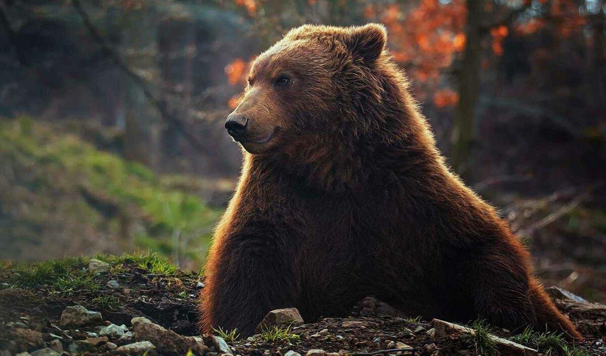 стала медведи картинки большого формата уже