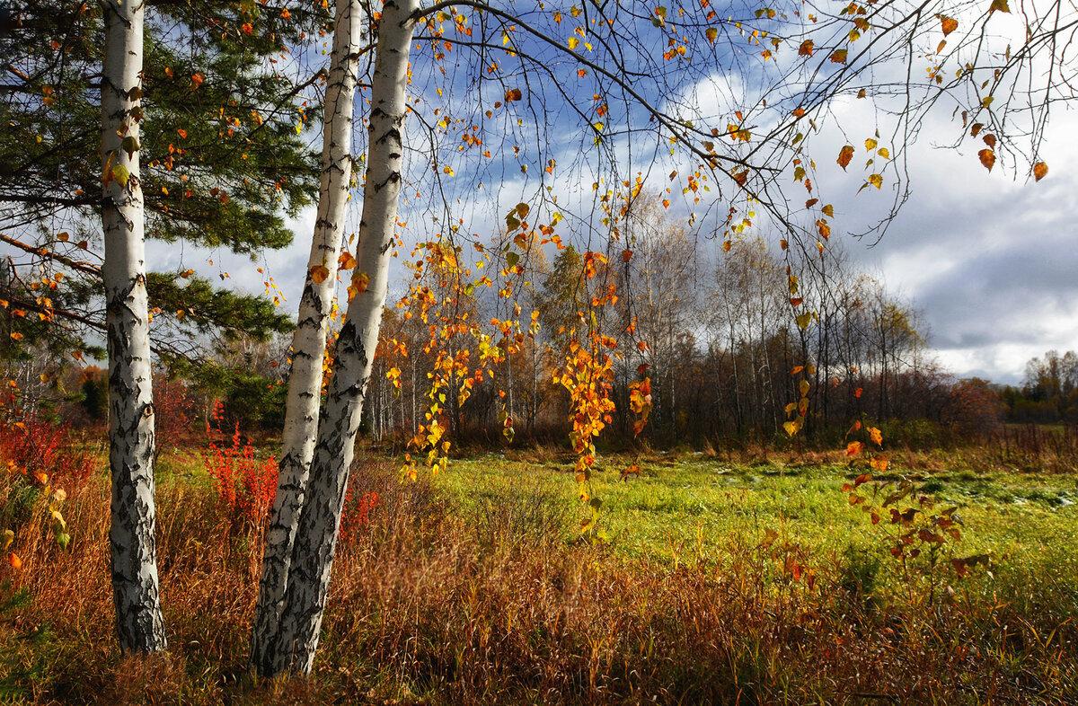 Осень картинки красивые береза