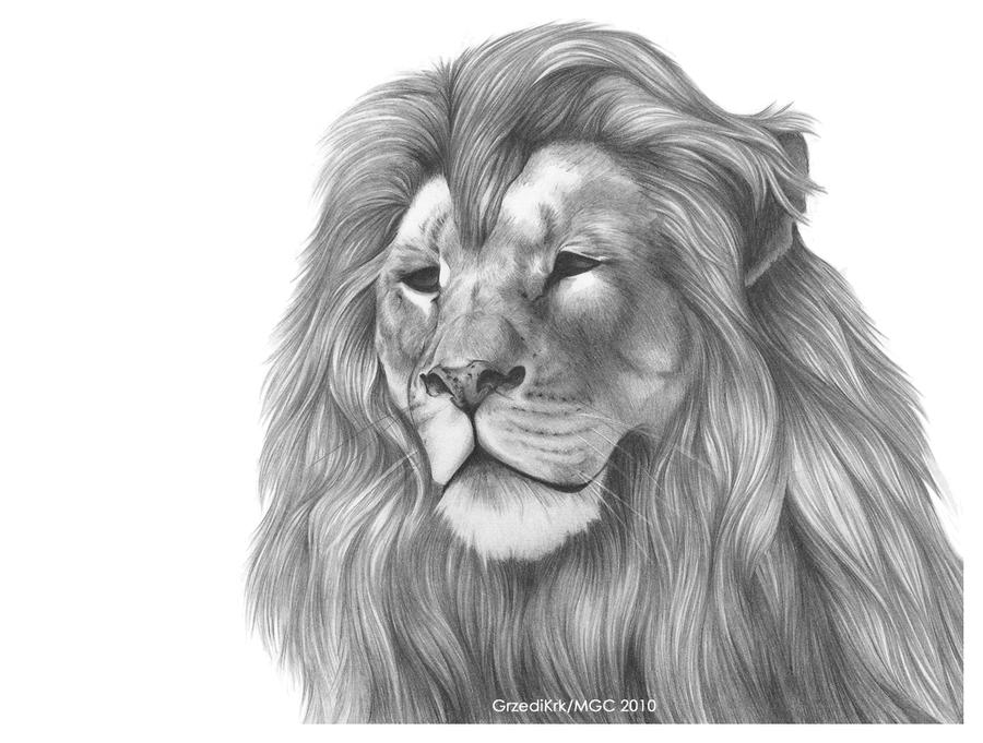 Картинки голова льва карандашом
