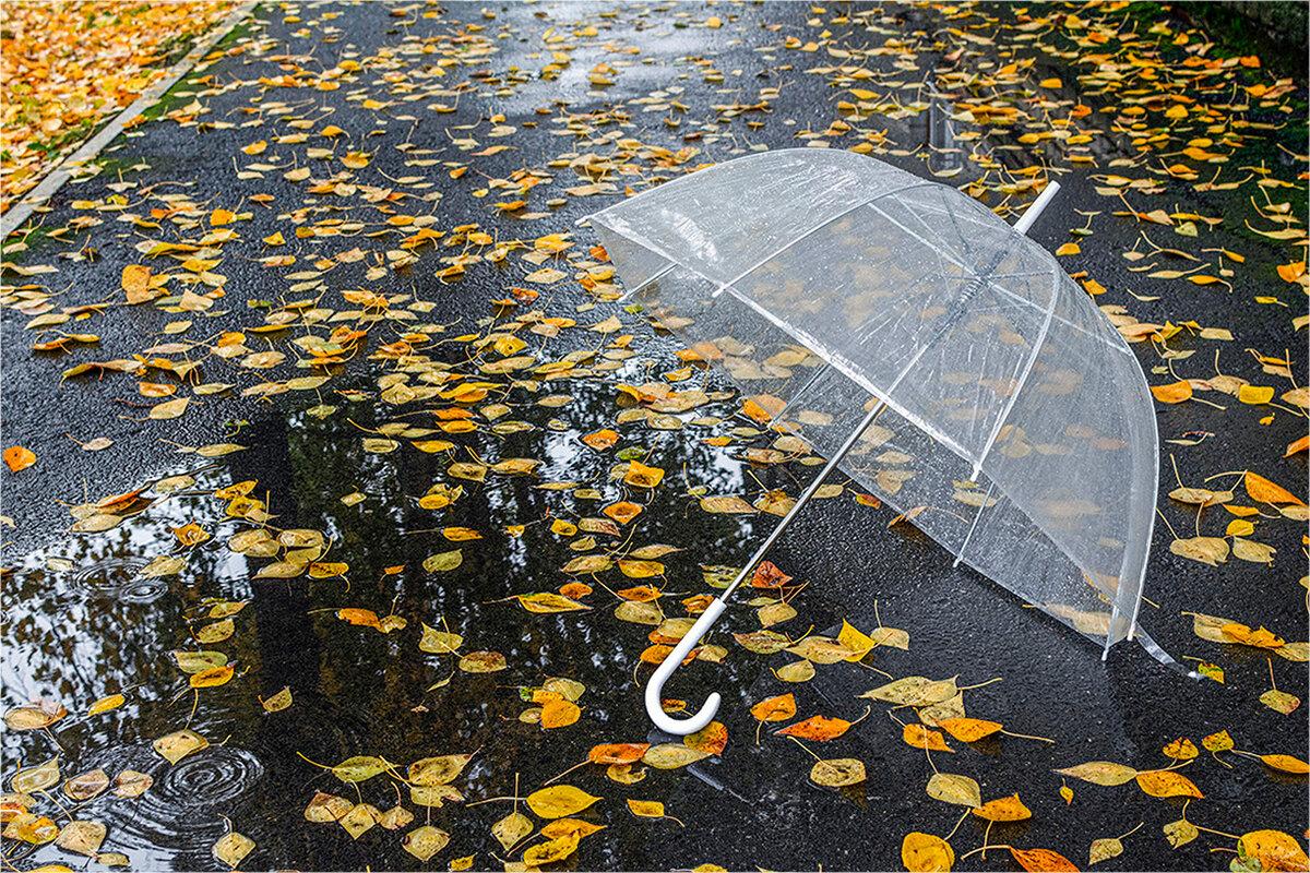 делать если осень зонт солнце фото такси