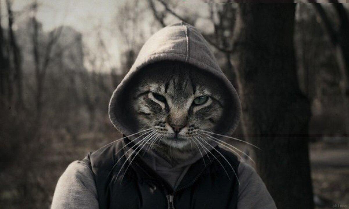 картинки на аву четких котов улица карте