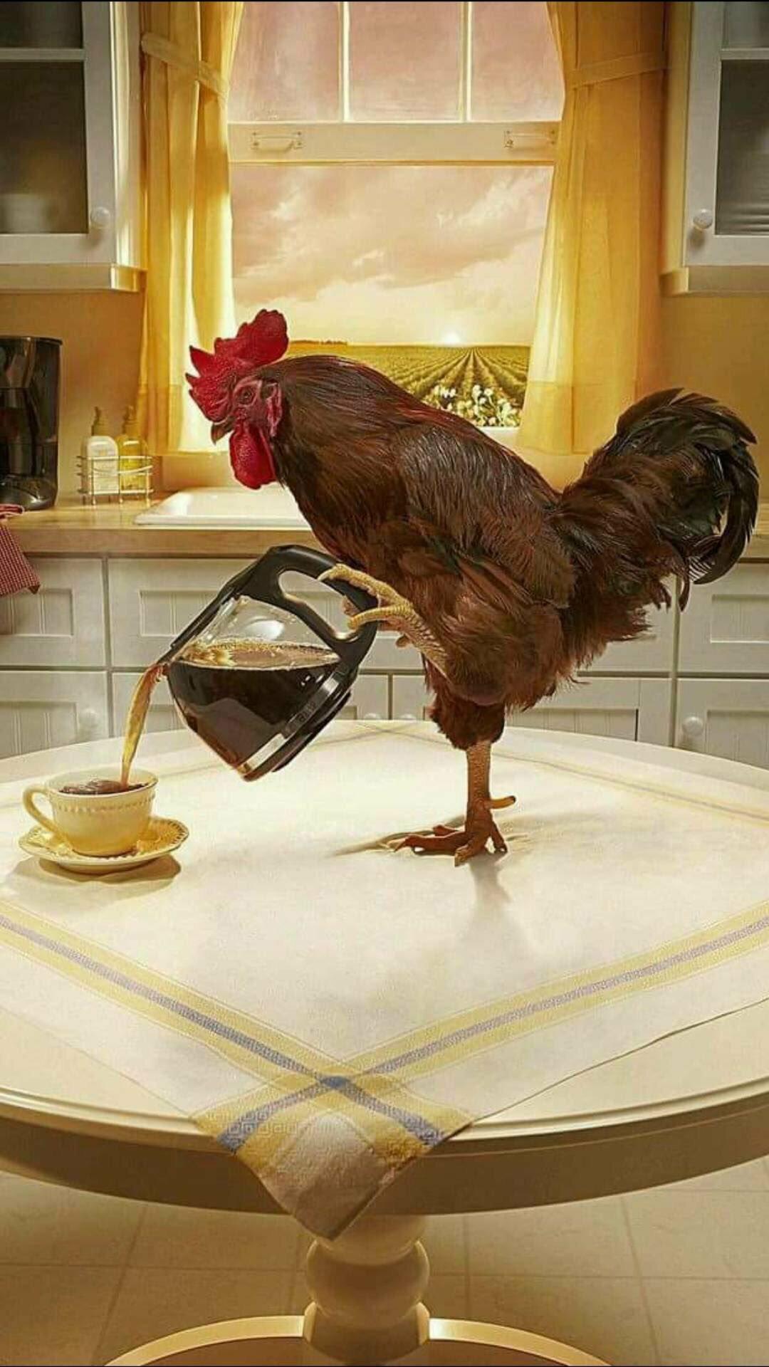 картинки с курицами доброе утро много веков зря