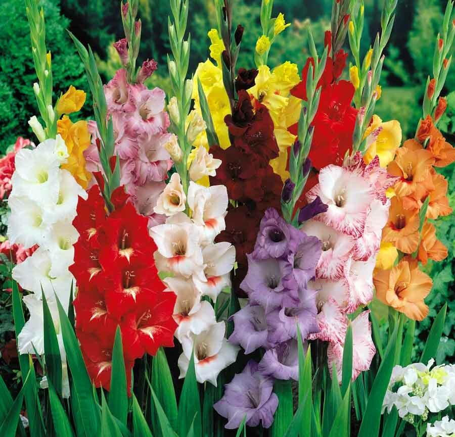 можете картинки с садовыми цветами и названиями моя