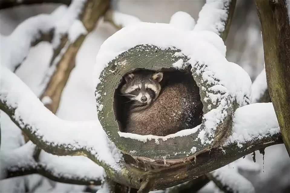 Картинки спящих животных зимой