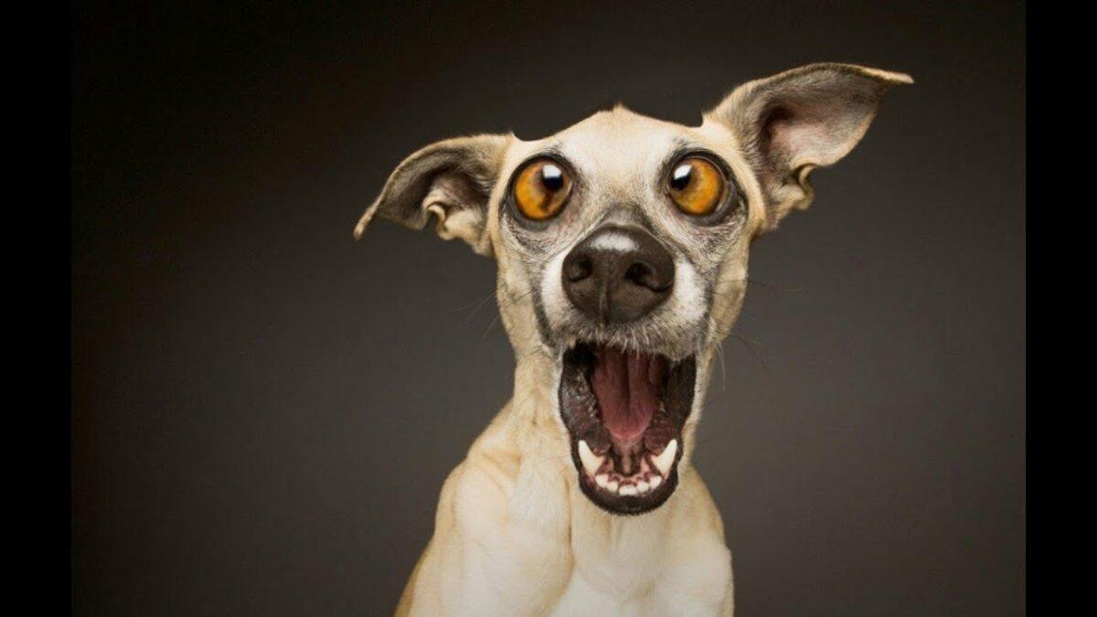 Смешные картинки злой пес
