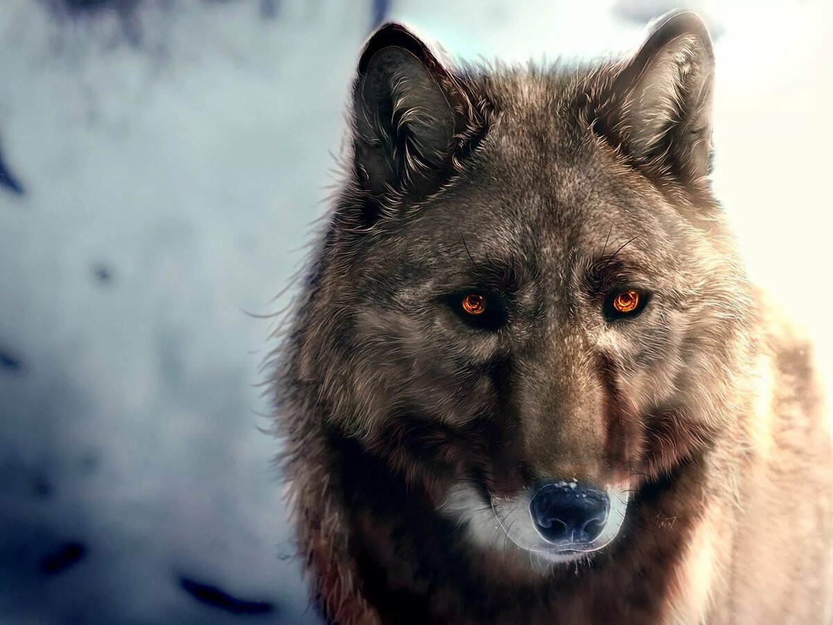 Фото с злым волком