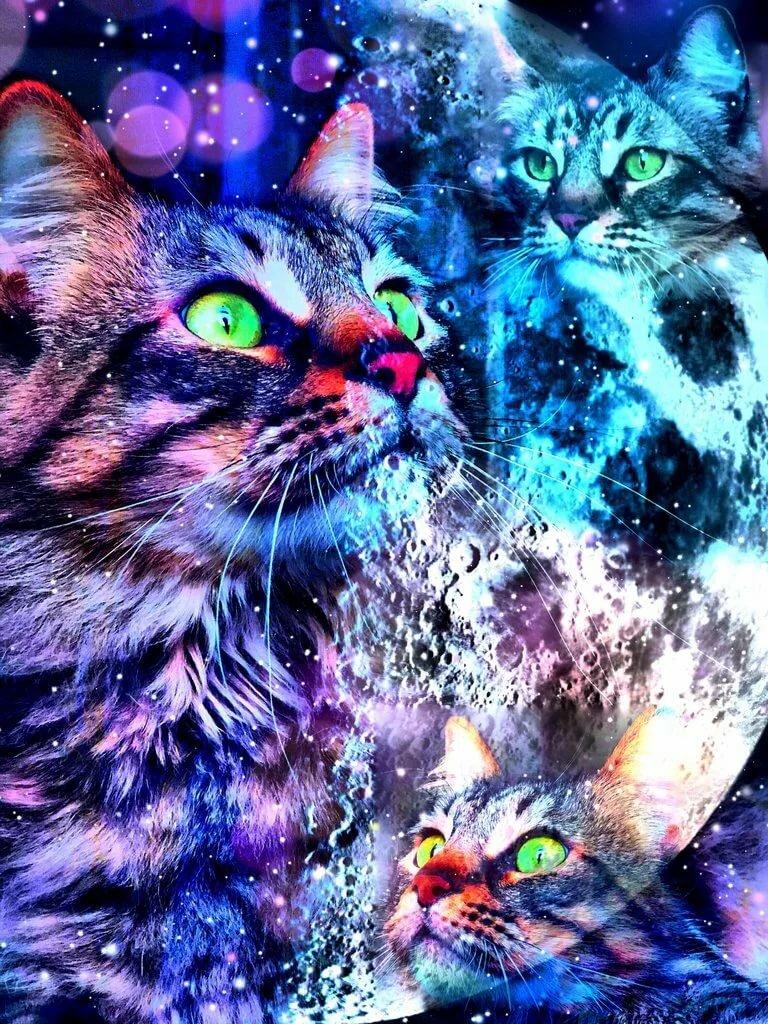 Картинки кошек на телефоны