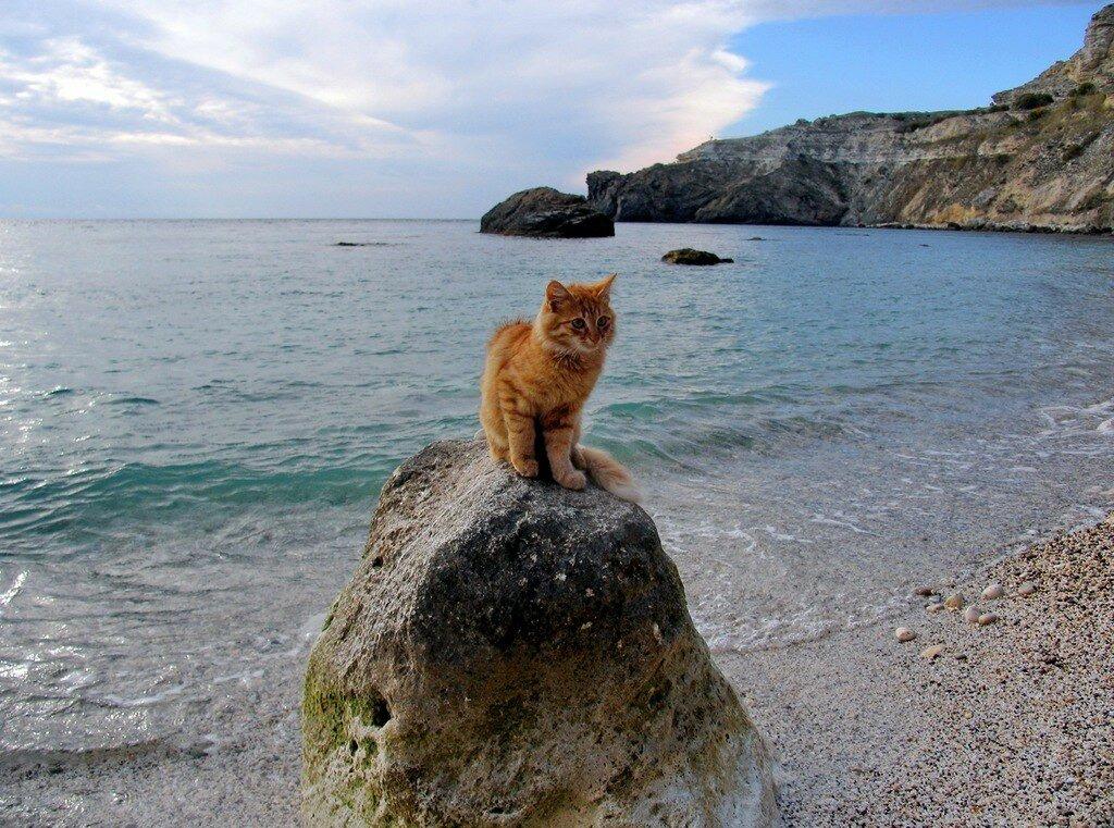 кошки в севастополе картинки актриса
