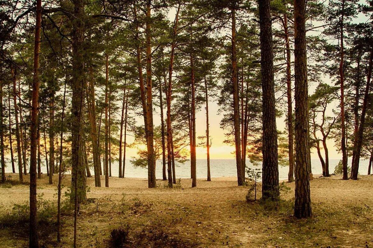 группировках картинка соснового леса отдых на море сразу можно, даже