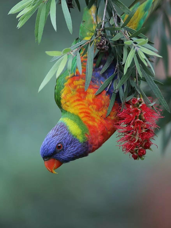 картинки с тропическими птицами пироги