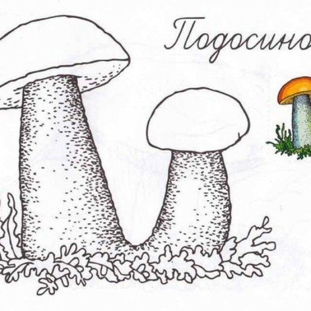 картинки грибов для раскрашивания подосиновик бананы