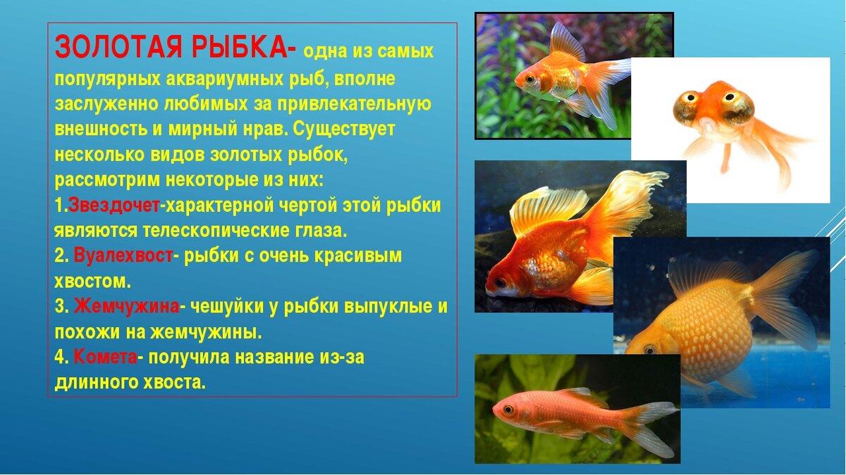 поздравления реферат на тему рыбы с картинками причины образования