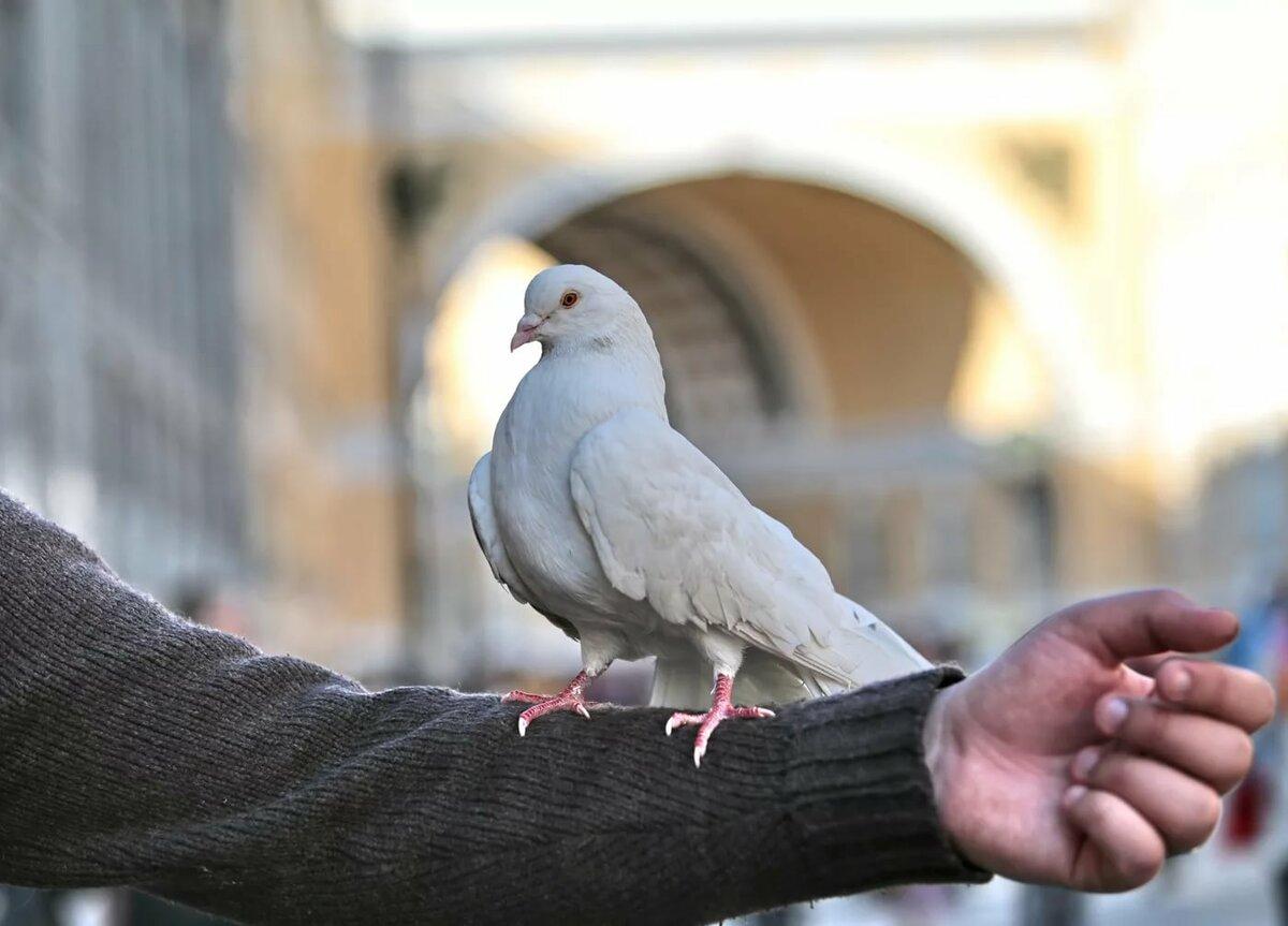 кормильцев приснилось что знакомый фотографирует голубей предупредил, что проверки