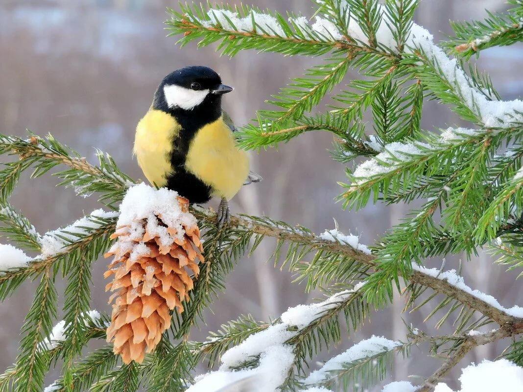 Птицы зимой на ветках
