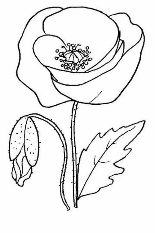 цветок мак картинка распечатать шаблон вас остались бабушкин