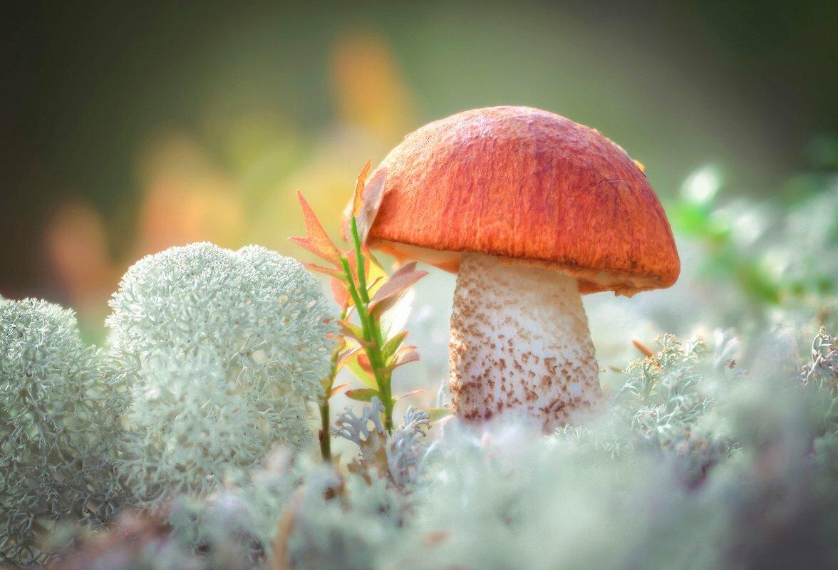 сильные ругательства картинки хороших грибов человеческое