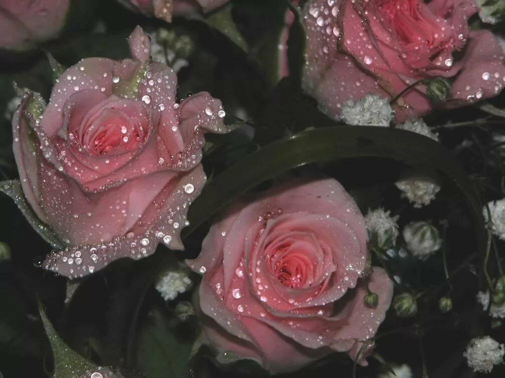 пожелать александру посмотреть картинки розы с блестками если честно