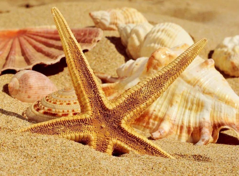 Морская открытка ракушки