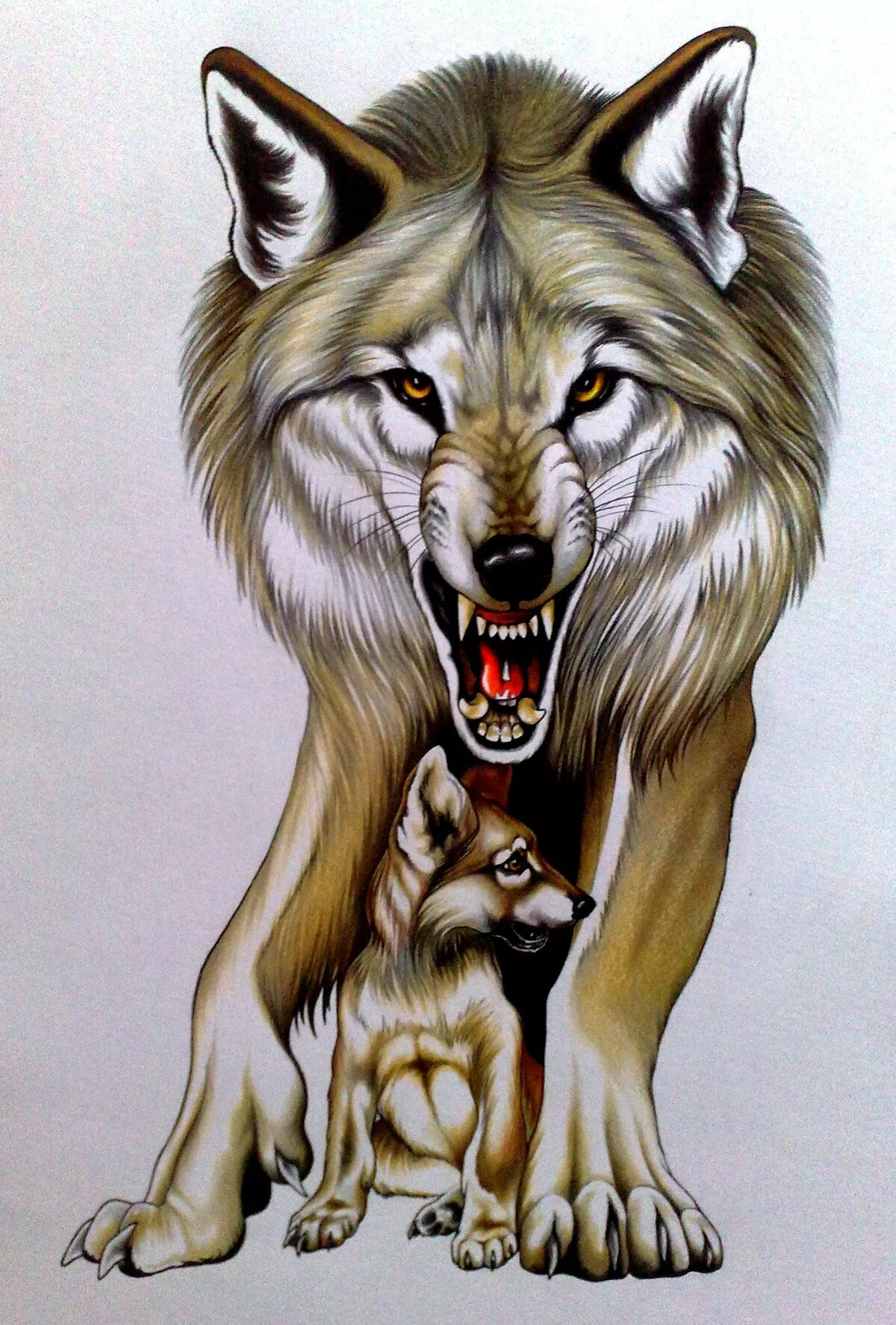Волки картинки рисунки
