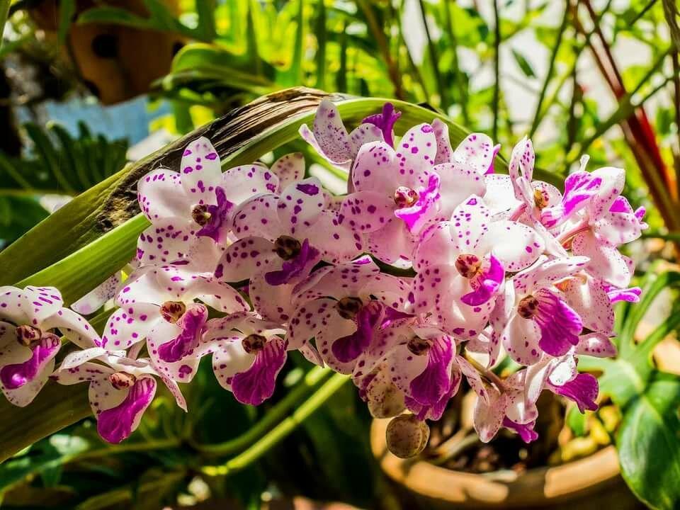 Орхидеи в картинки
