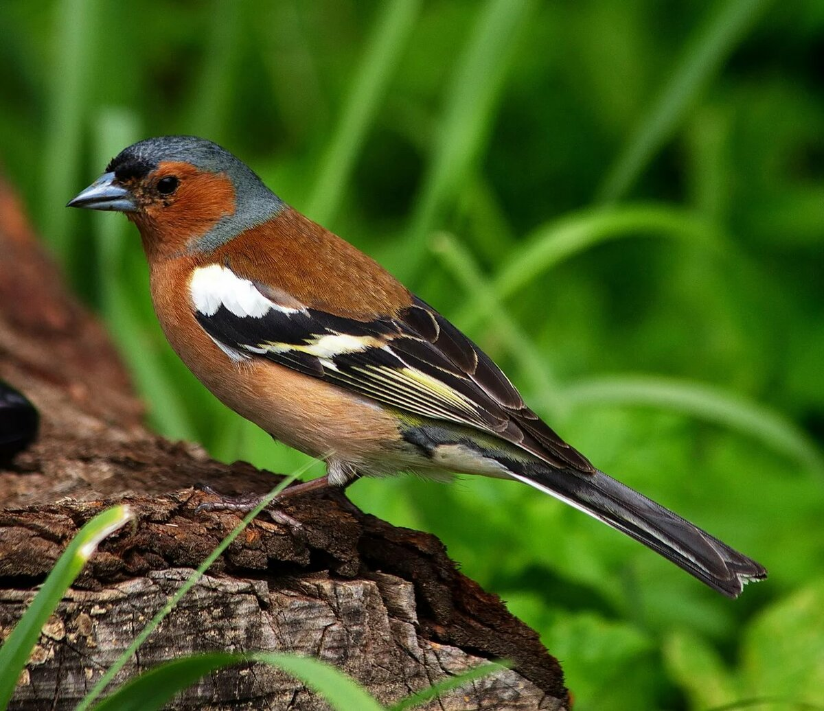 поразитесь, фото и названия лесных птиц мостовой, консольный