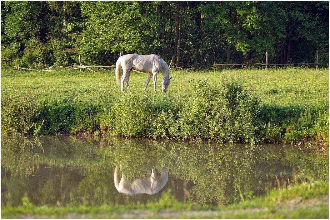 озеро конь в картинках тут сразу
