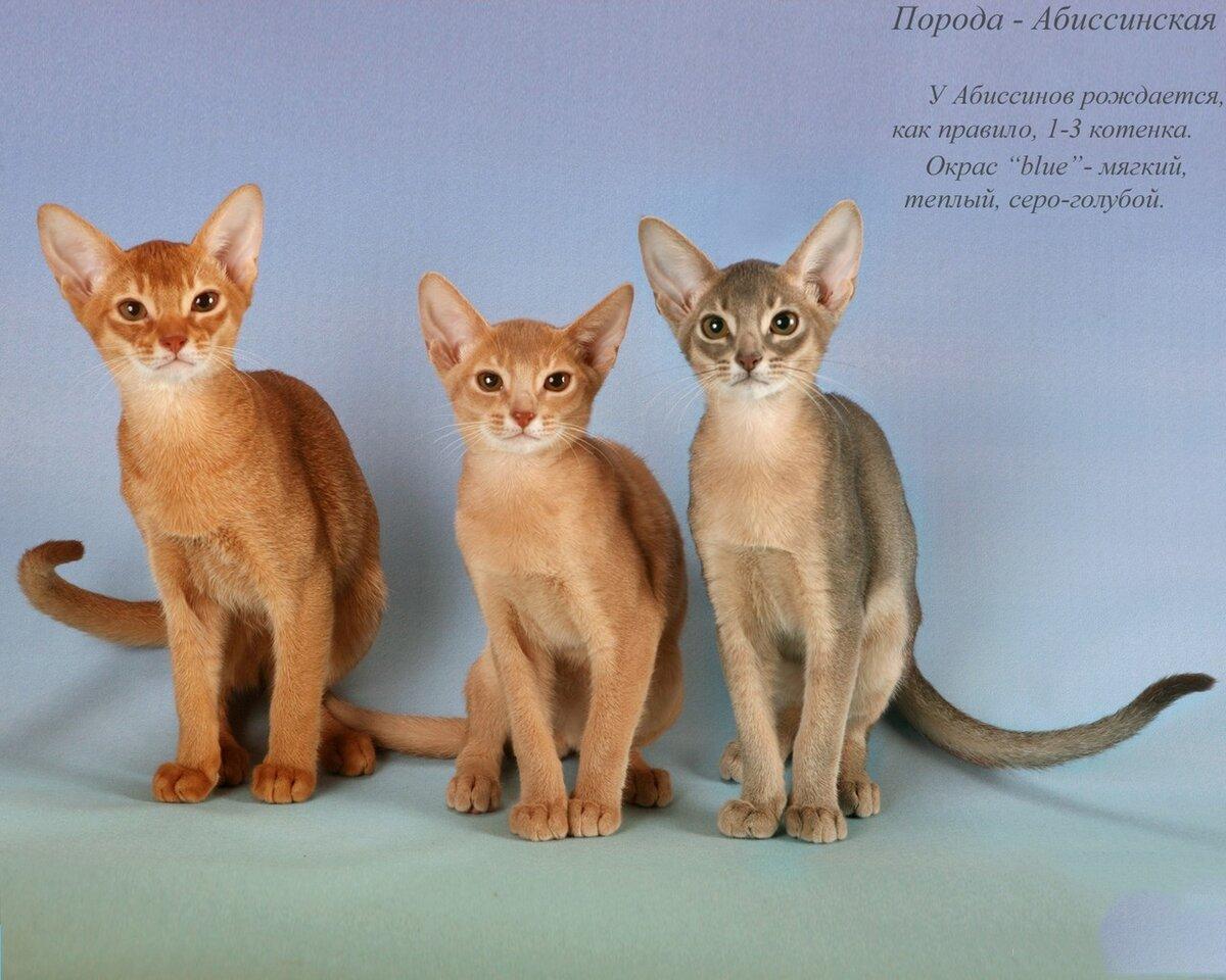 разновидности кошек с картинками очень редкого камня