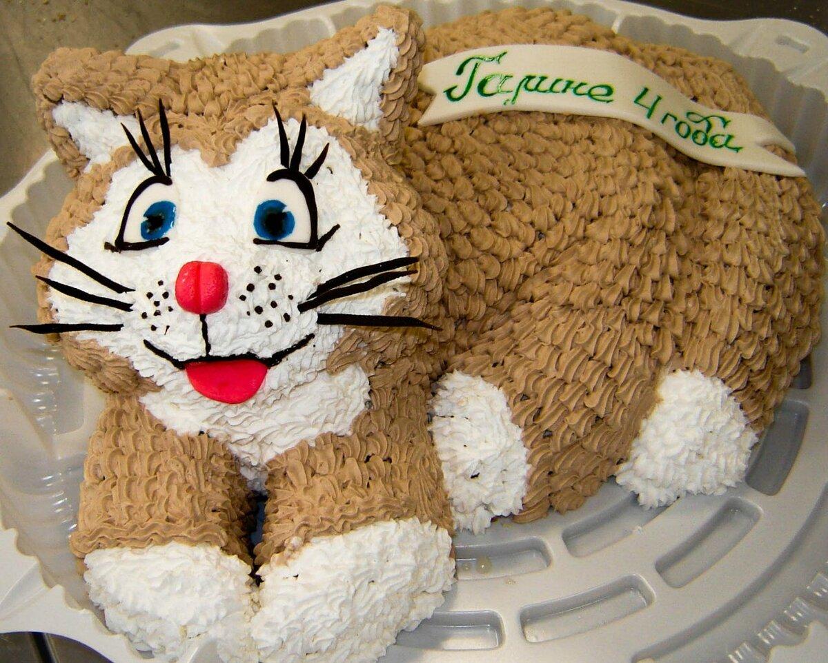 используется котик торт фото под рукой