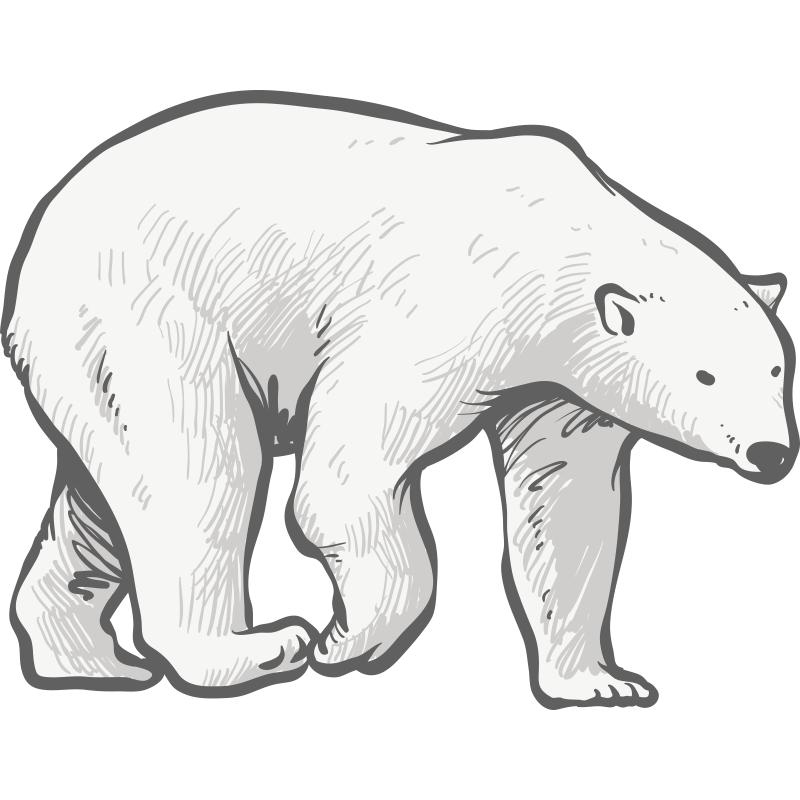 Картинки белых медведей карандашом